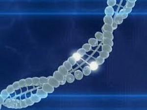 В кардиологическом лечении будет использоваться фактор действия гена BRCA1
