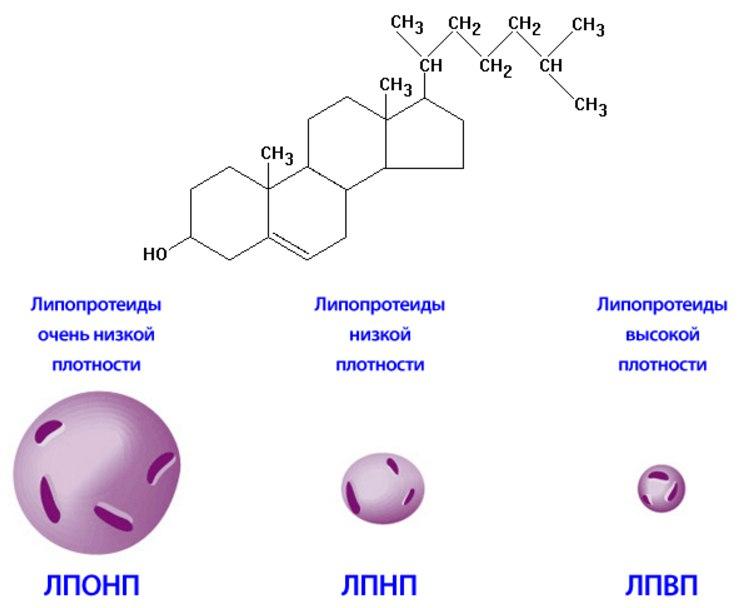 Лепопротеиды